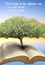 Tree of life bible photo blossom growing out depicting and knowledge includes text from proverbs which Stock Image