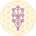 Tree of life fits perfect in the flower of life ten sephirots kabbalah a geometrical figure composed multiple evenly spaced Royalty Free Stock Photography
