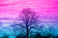 Tree of life silouette pink blue sky Royalty Free Stock Images