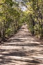 Tree lined Australian country rural dirt road surrounded by eucalyptus gum trees Royalty Free Stock Photo