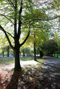 Tree Lined Avenue in Autumn Royalty Free Stock Photo