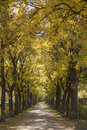 Tree Lined Country Road Royalty Free Stock Photos
