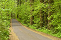 Tree lined country road this oregon small rural is with green evergreen and deciduous trees as it moves along into the forest Royalty Free Stock Image