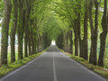 Tree lined country road in tuscany italy Royalty Free Stock Photo