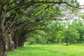 Tree lined with green grass Royalty Free Stock Photo