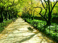 Tree-lined lane in park Royalty Free Stock Image