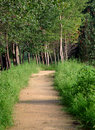 Tree lined path Stock Images
