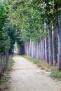 Tree lined path Royalty Free Stock Photo