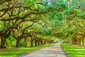 Tree Lined Plantation Entrance Royalty Free Stock Photo