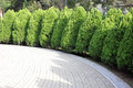 Tree Lined Road Royalty Free Stock Photo