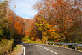 Tree lined road in autumn forest Stock Photo