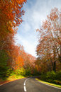 Tree lined road in autumn forest Stock Photography