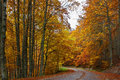 Tree-lined road in Irati, Navarre Stock Photo