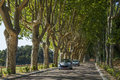 Tree lined road in the South of France Royalty Free Stock Image