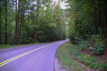 Tree lined roadway smoky mountains national park Royalty Free Stock Image