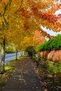 Tree Lined Sidewalk in Fall Season USA America Royalty Free Stock Photo