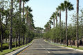 Tree-lined straat van de palm Royalty-vrije Stock Fotografie