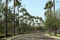 Tree-lined straat van de palm Royalty-vrije Stock Afbeelding