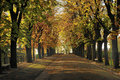 Tree Lined Street in Autumn Stock Photos