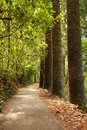 Tree lined woodland forest path Royalty Free Stock Images