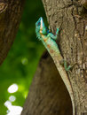 Tree lizard colorful on Stock Photography