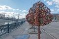 Tree with the locked wedding locks on the Bridge of Love.