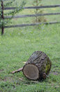 Tree log a chopped in a forrest near targoviste romania Royalty Free Stock Photography