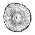 Tree log, wood growth rings grunge texture vector illustration