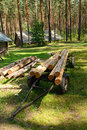 Tree logs freshly cut piled up Royalty Free Stock Image