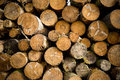 Tree logs stacked in a forest Royalty Free Stock Photos