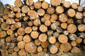 Tree logs stacked in a forest Royalty Free Stock Image