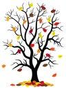 Tree loses fall foliage