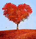 Tree of love Stock Photo