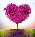 Tree of love beautiful heart shaped spring Royalty Free Stock Image