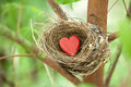 Tree love nest a birds with a red heart resting in a Stock Photography
