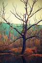 Tree in a marshy landscape dry swamp at sunset autumn Royalty Free Stock Photography