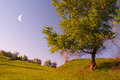 Tree, meadow, moon and clear sky Royalty Free Stock Image
