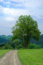 Tree in a meadow Royalty Free Stock Photo