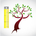 Tree measure illustration design over a white background Stock Image