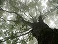 Strom v hmla