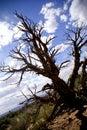 Tree in Moab, Utah Royalty Free Stock Image