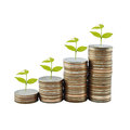 Tree on money growth concept in business Royalty Free Stock Photo