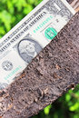 Tree with money us dollars Stock Photos