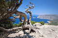 Tree monolithos in greece island rhodes view aegean sea Stock Images