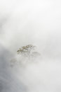 Tree in morning haze derbyshire england united kingdom bare a fog covered field Royalty Free Stock Image