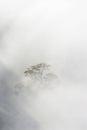 Tree in morning haze Royalty Free Stock Photo