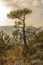Tree on mountain top Royalty Free Stock Photo