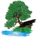 Tree near the water with dense green foliage of pool vector illustration Stock Image