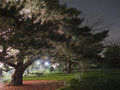 Tree at Night Stock Photography