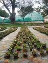 Tree, nursery, plants nursery house, greenery